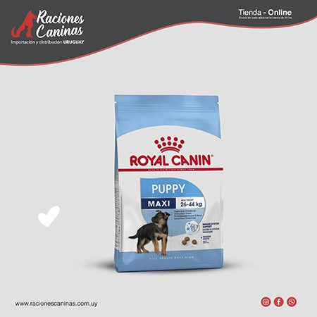 Royal Canin Maxi Junior x 15Kg
